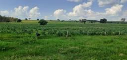Fazenda em alto das graças - mt