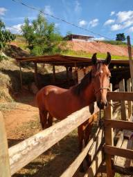 Potro 1 ano e 4 mês neto do cavalo Nike da arca de Noé