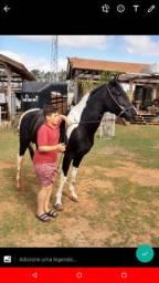Cavalo top pra criança e adultos