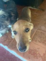 Cachorro de porte pequeno