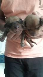 Cachorrinhos R$100.00