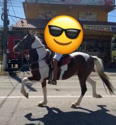 Cavalo pampa castanho
