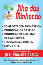 MINHOCAS VERMELHAS DA CALIFÓRNIA E MINHOCÁRIOS EM RECIFE