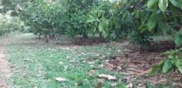 Fazenda de 21 hectares em Guaratinga Bahia