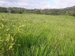 Fazenda em Roraima Sul do estado  CAROEBE