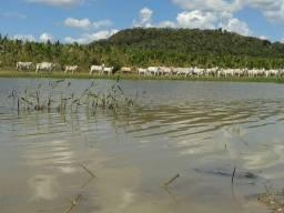 Fazenda em Governador Acher-MA