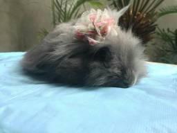 Filhotes de coelhos de raçã
