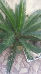 Sagu 90 cm, usado comprar usado  Rio de Janeiro