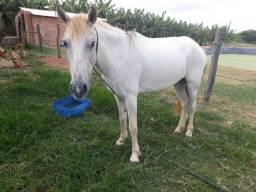 Vendo este lindo cavalo