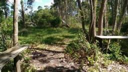 Velleda oferece área plana 1,3 hectares 800 metros da RS040