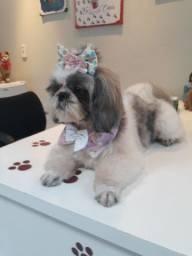 Promoção PetShop Kobrasol Banho R$30 /Banho+Tosa R$50