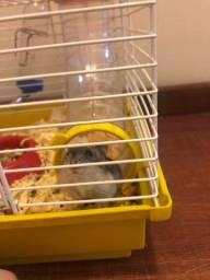 Hamster com gaiola, ração e serragem