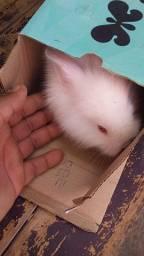 Mine coelhos