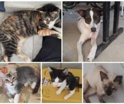 Gatas, gatinhos e cadela