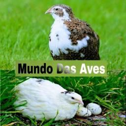 Criatório Mundo Das Aves