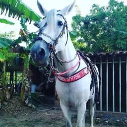 Cavalo, égua e potro(01 ano) Manga Larga