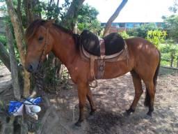Égua colorada