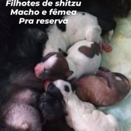 SHITZU reserva