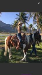 Linda égua MM pura de marcha picada apenas 8 anos