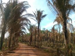 100 hectares de terra, na zona rural de Palmeirais, PI.