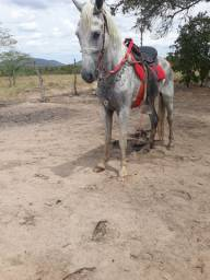 Cavalo e egua promoção