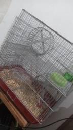 Título do anúncio: Hamster macho, com a gaiola