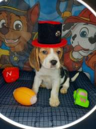 Título do anúncio: Beagle macho