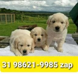 Título do anúncio: Canil Cães Filhotes Fantásticos BH Golden Dálmata Boxer Labrador Akita Rottweiler Pastor