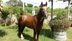 Cavalo inteiro manga larga