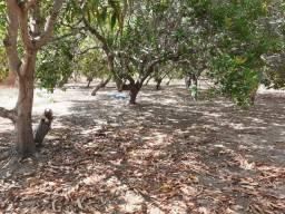 Vendo terreno de 36.hectares a 6 km de Timon