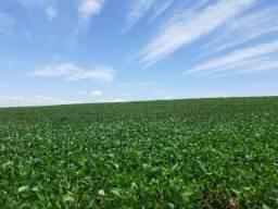 8271 | fazenda à venda em ivailandia