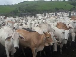 Vendo fazenda de 109 alqueire todo em pasto pro gado