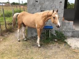 Aluguel de Cavalos