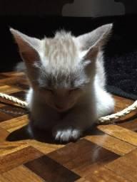 Doação de gato 2 meses