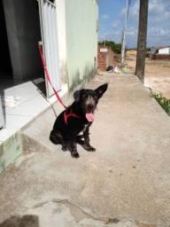 Adoção cadela (aceito indicação ou ongue)