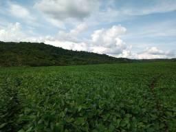 Abatiá PR - 16 alqueires terra roxa agricultura