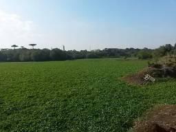 REF. 1411 - Terreno rural com 87.685,50 m² no Palmital - Araucária