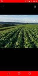 Vendo terra para plantio