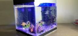 Aquário e acessórios para peixes