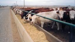 Vendas de gado