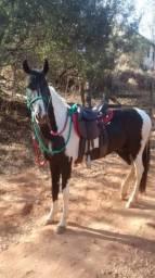 Cavalo pampa de preto CONTATO : *