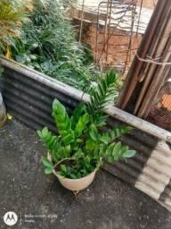 Plantas , de vários tipos
