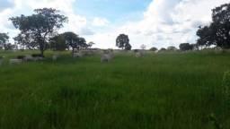 Fazenda 400 ha Pitangui