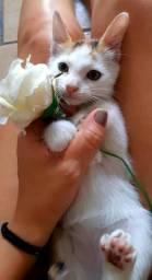 DOAÇÃO de gatinhos (só tem uma agora)