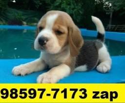 Canil Filhotes Cães Pet BH Beagle Lhasa Yorkshire Shihtzu Basset Maltês