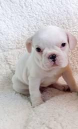 Título do anúncio: Bulldog Francês fêmea