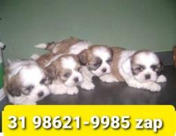 Título do anúncio: Canil Filhotes Cães Incríveis BH Lhasa Poodle Yorkshire Basset Shihtzu Maltês