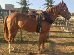 Cavalo de Direita com papel