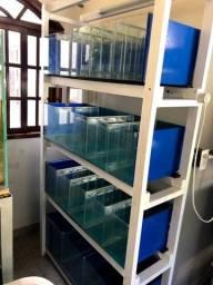 Bateria de aquários