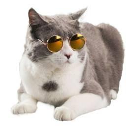 Óculos para gatos